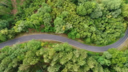 Road through the forest - tracking shot, aerial view