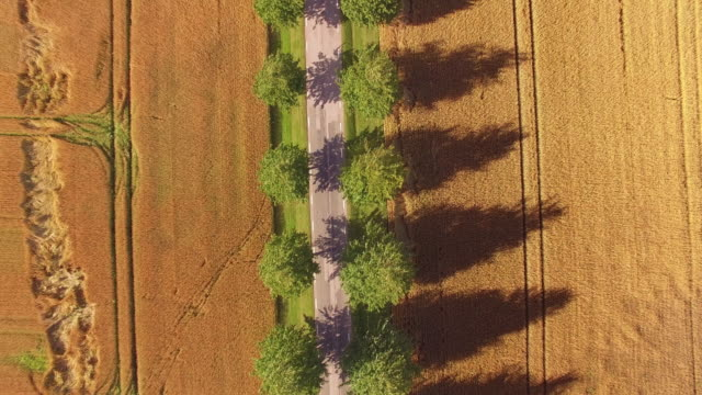 Road Through Wheat Field Farm in Motion