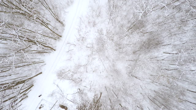 AERIAL Road through wintry forest