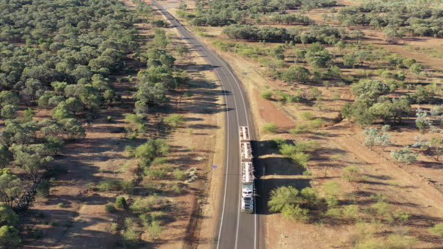 road train. - cattle stock videos & royalty-free footage