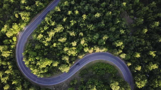 vídeos de stock e filmes b-roll de road trip through a forest - aerial point of view - parque natural