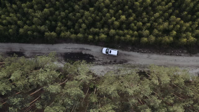 vídeos de stock e filmes b-roll de road trip through a forest. drone point of view - pinhal