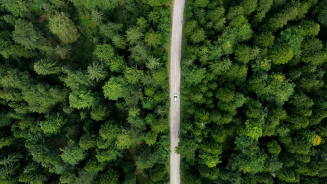 road trip through a forest - aerial view stock videos & royalty-free footage