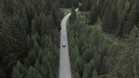 vídeos y material grabado en eventos de stock de viaje por carretera a través de un bosque - vehículo terrestre