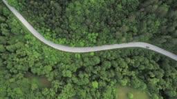 Road trip through a forest