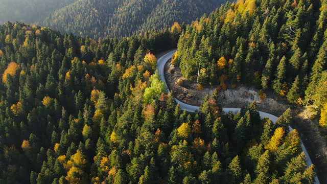 road trip through a forest - wide stock videos & royalty-free footage