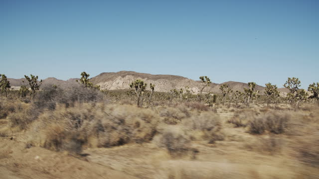 sm road trip through the desert. - succulent plant stock videos & royalty-free footage