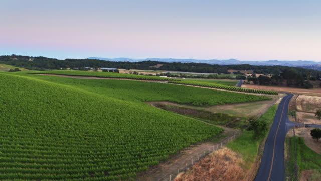 Road Winding Between Vineyards in Sonoma County, California