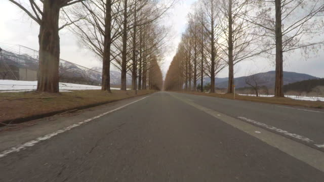 Road With autumn Trees -low angle-