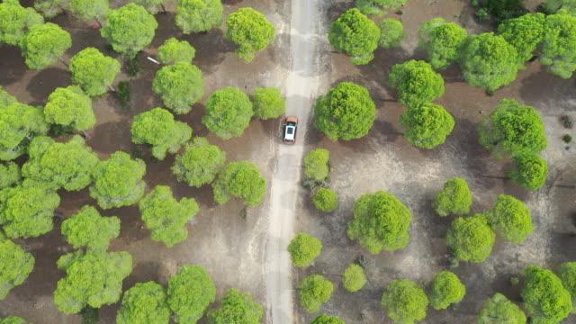 vídeos de stock e filmes b-roll de road with car in forest from above - vista de cima para baixo