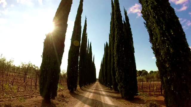 Road with cypress trees