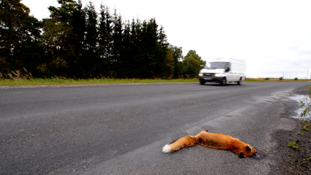 roadkill - run over stock videos & royalty-free footage