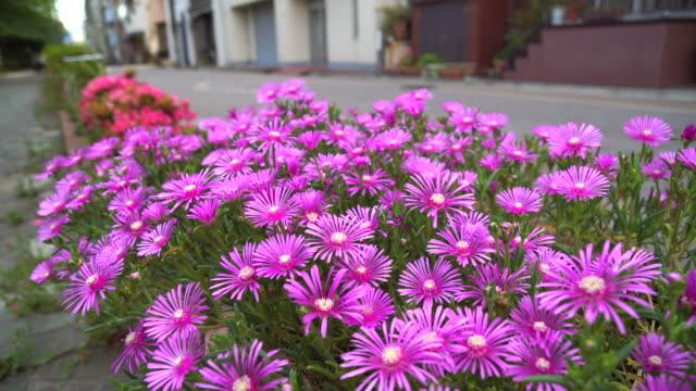 道端の花 - 自生点の映像素材/bロール