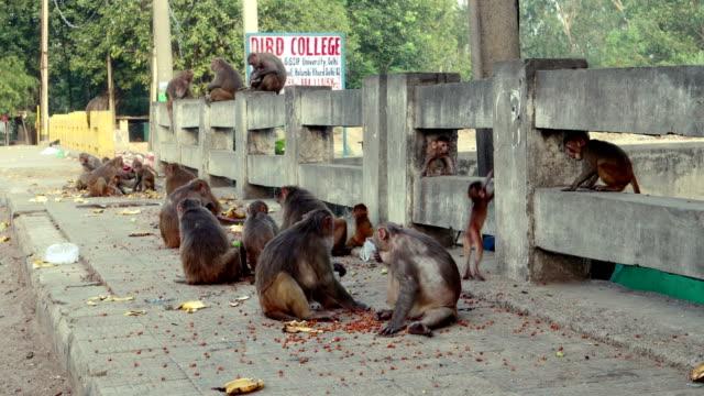 roadside monkey in delhi, india - roadside stock videos & royalty-free footage