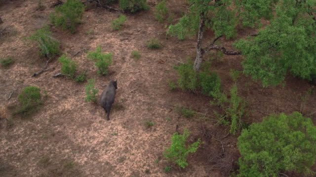roaming-allein durch die busch - krüger nationalpark stock-videos und b-roll-filmmaterial