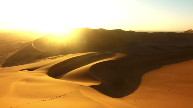 roaming the desert at dawn - namibia stock videos & royalty-free footage