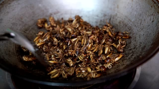 Roasted cricket, fried Insect in pan, cooking for meal