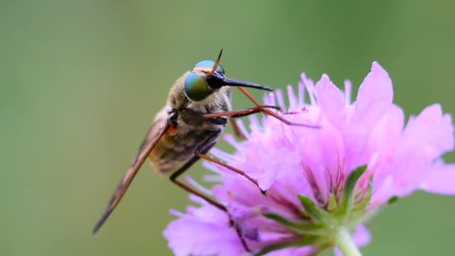 vídeos y material grabado en eventos de stock de mosca cazadora  - antena parte del cuerpo animal