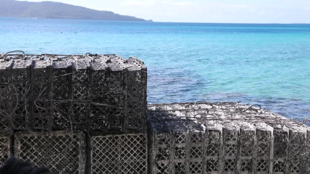 robert wan tahiti pearl factory in aukena french polynesia the process to make a pearl step by step - tahiti stock videos & royalty-free footage
