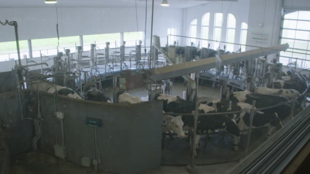 WS of robotic milking system on dairy farm
