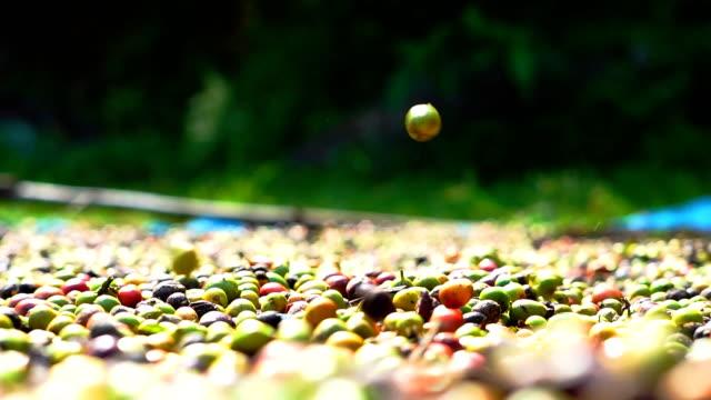 vídeos de stock, filmes e b-roll de fazenda de café robusta. - molécula de cafeína