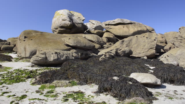 rock formation on beach at low tide with seaweed - meeresalge stock-videos und b-roll-filmmaterial
