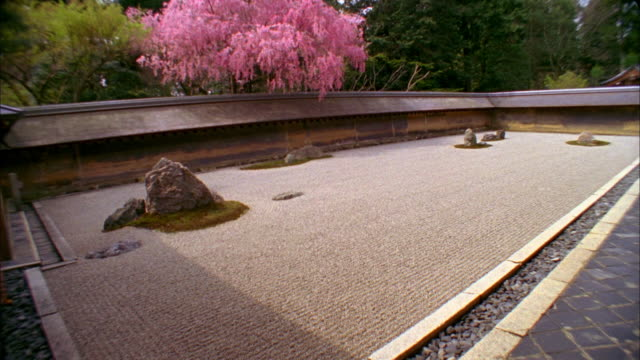 ws tu rock garden and cherry blossoms at ryoanji temple, kyoto, japan - kyoto temple stock videos and b-roll footage