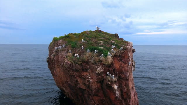 vídeos de stock e filmes b-roll de 'rock of seagulls' on the coast of the white sea, kola peninsula - ametista