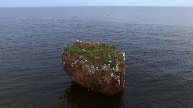'rock of seagulls' on the coast of the white sea, kola peninsula - exoticism stock videos & royalty-free footage