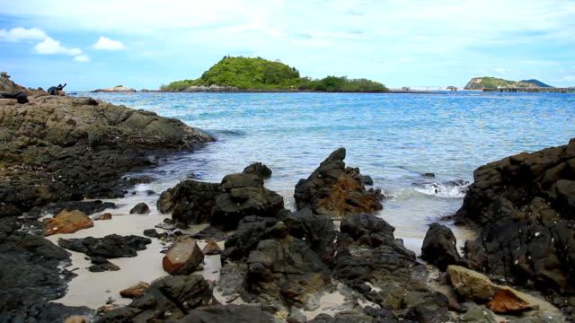 vidéos et rushes de rock sur la plage tropicale - arbre tropical