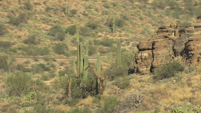 MS AERIAL ZI DS Rock outcropping with cacti and cacti skeletons in Saguaro National Park / Arizona, United States