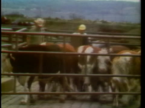 rock port mo. slaughterhouse and meat packing plant - business or economy or employment and labor or financial market or finance or agriculture stock videos & royalty-free footage