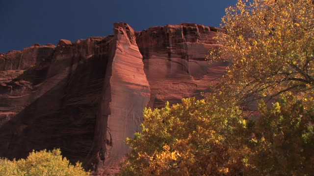 MS rock wall and trees with autumn leaves/ Canyon de Chelly National Monument, Arizona
