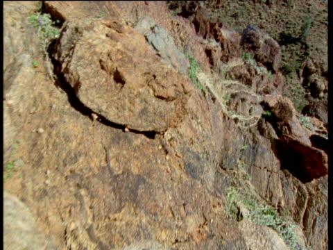 stockvideo's en b-roll-footage met rock wallaby's eye view hopping over rocks to gorge, flinders range, australia - ruimte exploratie