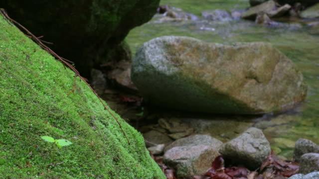 rock with moss / hongcheon-gun, gangwon-do, south korea - エコツーリズム点の映像素材/bロール