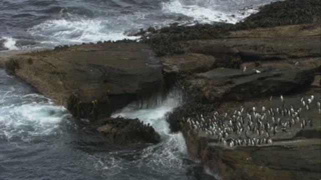 stockvideo's en b-roll-footage met ws, ha, rockhopper penguins on cliff ocean, new island, antarctica - atlantische eilanden