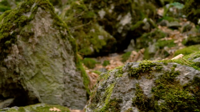 rocks and moss - moss stock videos & royalty-free footage