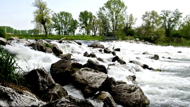 piante e rocce vicino a un fiume cascata - fiume video stock e b–roll