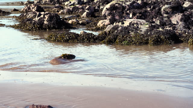 rocks covered in seaweed on a scottish beach - general view stock videos & royalty-free footage