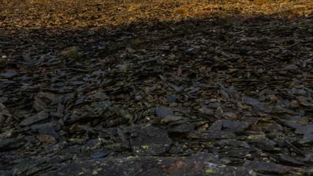 Rocks in field