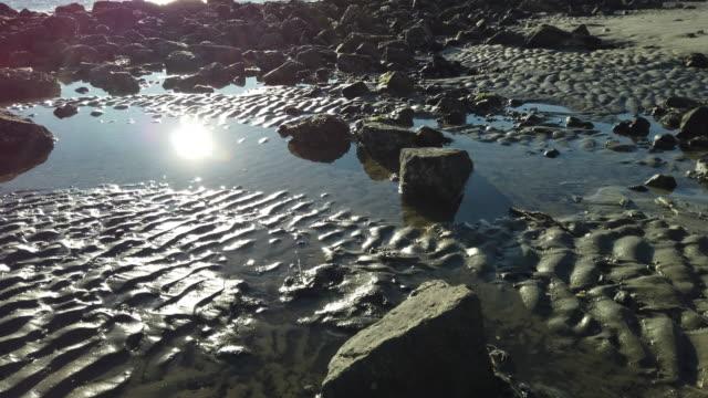 stockvideo's en b-roll-footage met rocks on the beach at sunrise - drijfhout