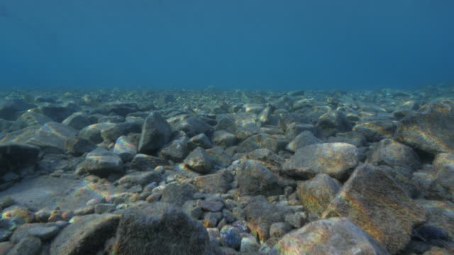 rocks underwater - red sea stock videos & royalty-free footage