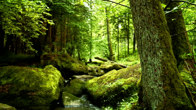 felsigen waldbach im frühjahr - naturwald stock-videos und b-roll-filmmaterial
