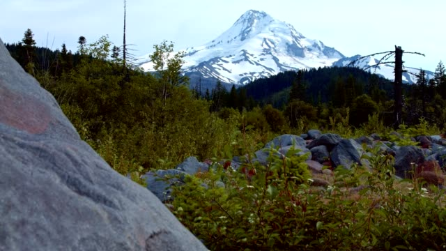 rocky meadow and snowcapped peak 1 summer on mound hood - portland oregon summer stock videos & royalty-free footage