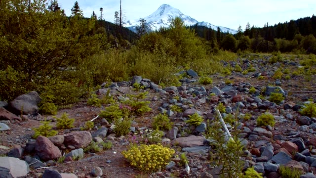 rocky meadow and snowcapped peak 2 summer on mound hood - portland oregon summer stock videos & royalty-free footage