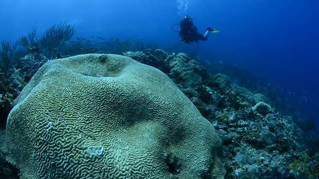 rocky reef and diver. - gorgonian coral stock videos & royalty-free footage