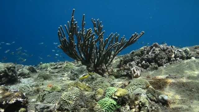 rocky reef. - gorgonian coral stock videos & royalty-free footage