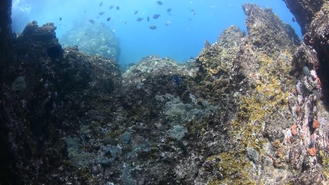 rocky reef. - ゴーゴニアンコーラル点の映像素材/bロール