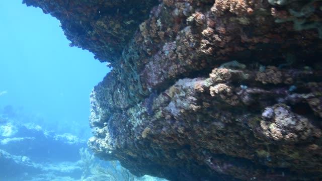 stockvideo's en b-roll-footage met rocky reef. - in het water levend organisme