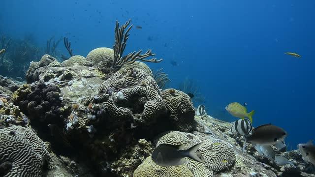 rocky reef. - イットウダイ点の映像素材/bロール